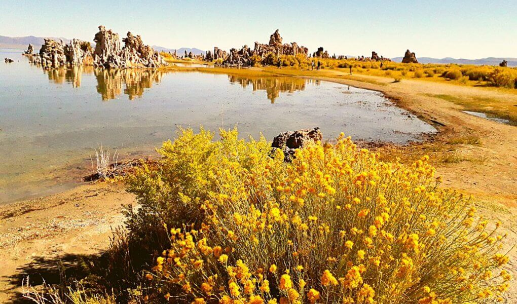 Mono Lake met gele bloemen